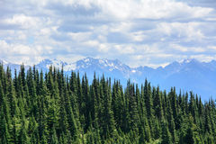 Paesaggio nelle montagne, parco nazionale olimpico, Washington, U.S.A. della foresta Immagini Stock