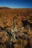 Paesaggio nelle montagne, vecchio albero di autunno del torso Immagine Stock