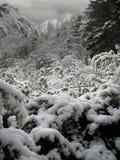 Paesaggio nevicato Fotografia Stock Libera da Diritti