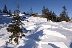 Paesaggio nevoso di inverno. Natura selvaggia in Russia.Taiga Fotografia Stock Libera da Diritti