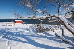 Paesaggio norvegese del fiordo di inverno con l'albero Fotografie Stock Libere da Diritti