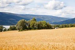 Paesaggio in Norvegia Immagine Stock Libera da Diritti