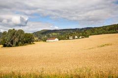 Paesaggio in Norvegia Fotografia Stock Libera da Diritti