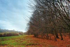 Paesaggio nuvoloso di autunno della montagna con la foresta variopinta Immagine Stock Libera da Diritti