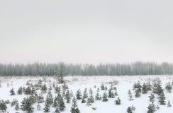 Paesaggio nuvoloso di inverno Immagine Stock Libera da Diritti