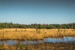 Paesaggio in Olanda Immagini Stock