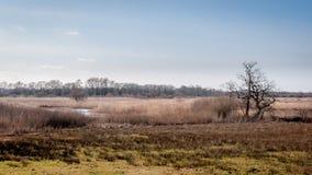 Paesaggio olandese con un fiume, l'erica e un albero fotografie stock libere da diritti