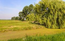 Paesaggio olandese del ploder con un salice piangente nella priorità alta Immagine Stock Libera da Diritti