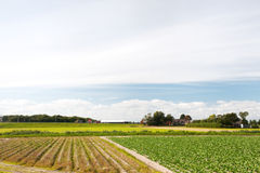 Paesaggio olandese di agricoltura Fotografia Stock