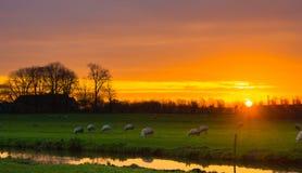 Paesaggio olandese di alba Fotografie Stock Libere da Diritti