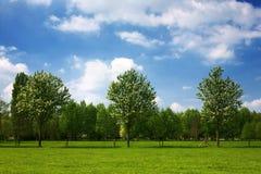 Paesaggio olandese di estate Fotografie Stock Libere da Diritti