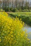 Paesaggio olandese nella primavera Immagine Stock