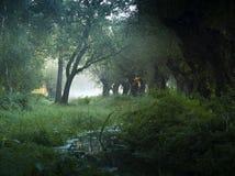 Paesaggio olandese tipico immagine stock