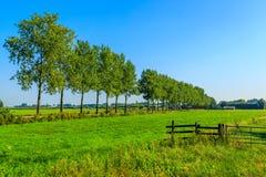 Paesaggio olandese tipico Immagine Stock Libera da Diritti