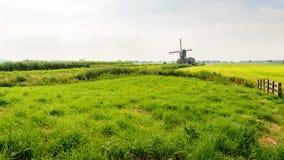 Paesaggio olandese tipico del ploder nella stagione estiva Immagine Stock