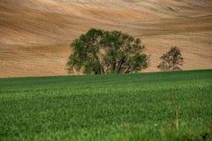 Paesaggio ondulato con gli alberi in Boemia centrale immagini stock libere da diritti
