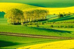 Paesaggio ondulato della molla dei prati in Moravia del sud Immagine Stock