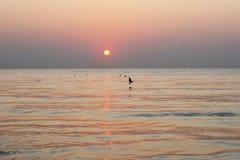 Paesaggio pacifico della spiaggia di alba Immagini Stock