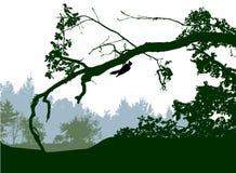 Paesaggio panoramico della foresta con le siluette degli alberi e dell'uccello Fotografia Stock Libera da Diritti