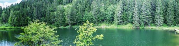 Paesaggio panoramico di Alpin Lago con gli alberi nella stagione estiva Fotografia Stock Libera da Diritti