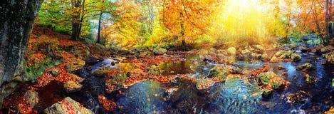 Paesaggio panoramico di autunno con la corrente della foresta Backg della natura di caduta immagini stock libere da diritti
