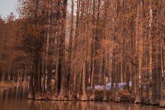Paesaggio - parco del pino con il fiore dell'erba nella stagione invernale Immagine Stock