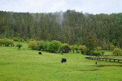 Paesaggio pastorale Immagine Stock Libera da Diritti
