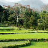 Paesaggio pastorale Immagini Stock