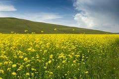 Paesaggio pastorale di estate Fotografie Stock Libere da Diritti