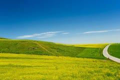 Paesaggio pastorale di estate Fotografia Stock