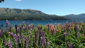 Paesaggio Patagonian Immagini Stock