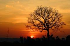Paesaggio, penombra dorata della luce della Tailandia fotografie stock libere da diritti