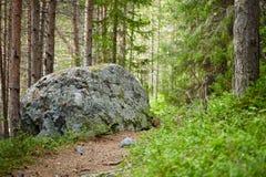 Paesaggio - percorso in foresta conifera Fotografie Stock Libere da Diritti