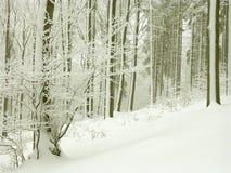 Paesaggio perfetto della foresta di inverno Immagini Stock