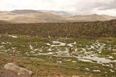 Paesaggio peruviano Fotografia Stock Libera da Diritti