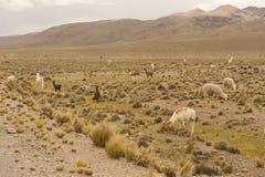 Paesaggio peruviano Immagine Stock