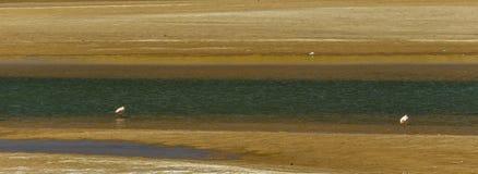 Paesaggio peruviano, uccelli, Perù Fotografie Stock Libere da Diritti