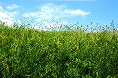 Paesaggio piacevole del wather Immagine Stock