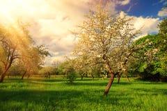 Paesaggio pieno di sole di estate Raggi luminosi del sole su di melo fotografia stock
