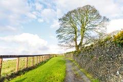 Paesaggio pittoresco dell'Irlandese Fotografie Stock
