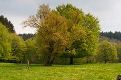Paesaggio pittoresco della primavera in un parco nuvoloso Fotografia Stock