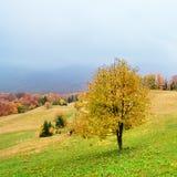 Paesaggio pittoresco di autunno nelle montagne con il prato ed in alberi variopinti su priorità alta e su nebbia sopra la valle I Immagine Stock