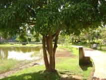 Paesaggio predominante il colore verde delle foglie dell'albero, proteggenti l'acqua della laguna fotografia stock