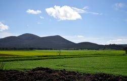 Paesaggio in primavera Immagine Stock