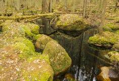 Paesaggio profondo della foresta Immagini Stock