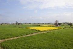 Paesaggio punjabi Fotografie Stock