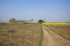 Paesaggio punjabi agricolo Fotografia Stock