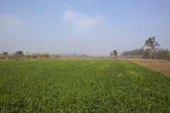 Paesaggio punjabi nebbioso Fotografie Stock