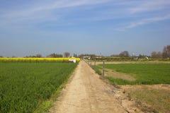 Paesaggio punjabi rurale Immagini Stock Libere da Diritti