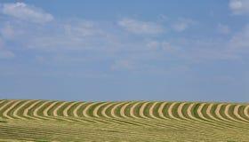 Paesaggio raccolto del campo Immagine Stock